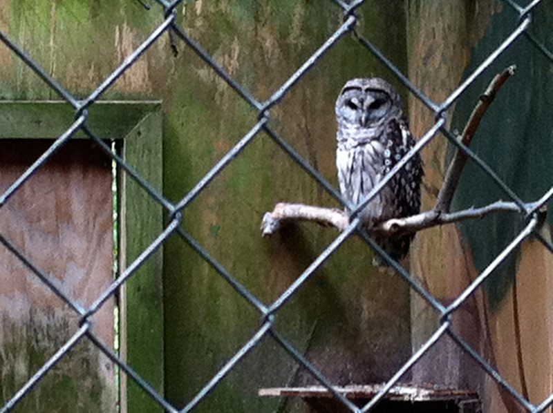 porp_owl