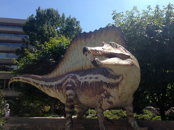 """A life-size """"in the flesh"""" model of Spinosaurus in the Nat Geo courtyard is a must-see along with the exhibit"""