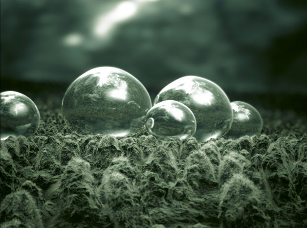 A microscopic look at pond bubbles