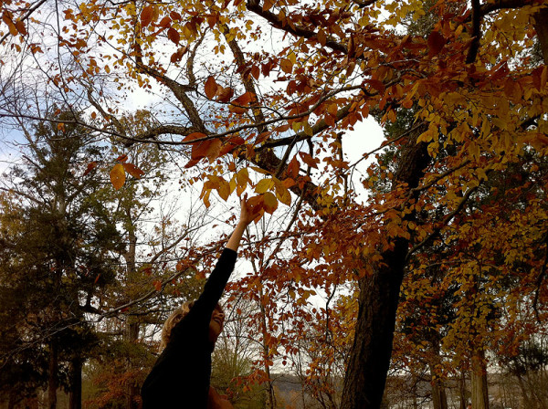 fall_o