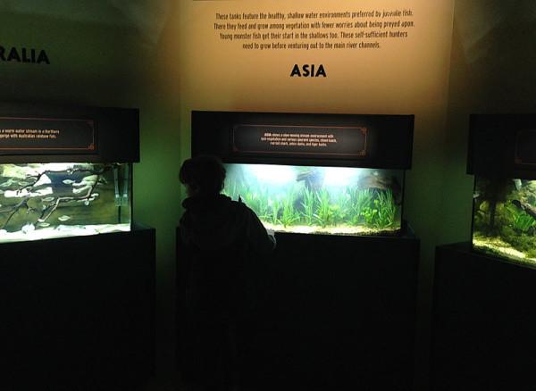 monsterfish_aquariums