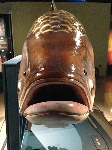 monsterfish_barb