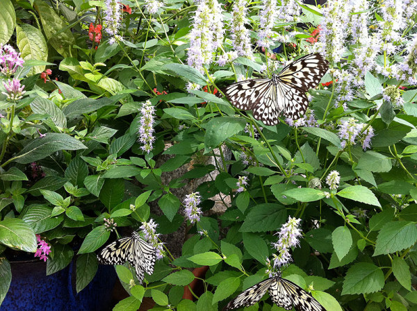 Fancy some butterflies at Brookside Gardens
