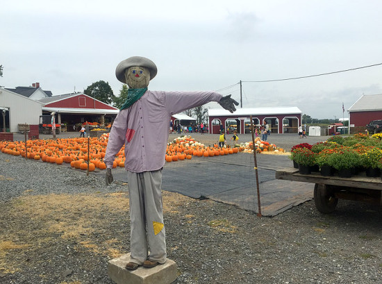 That-a-way for autumn fun on the farm at Homestead