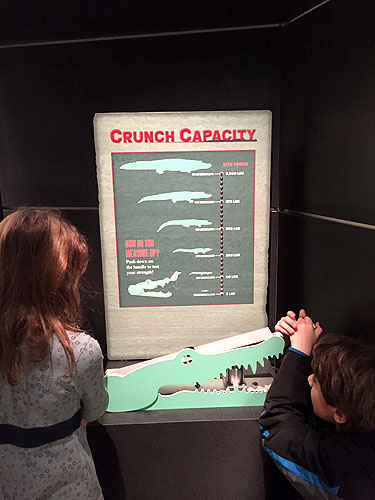 crocs_crunch