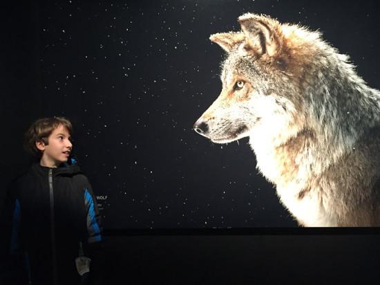 Get a close look at the world's animals at Nat Geo