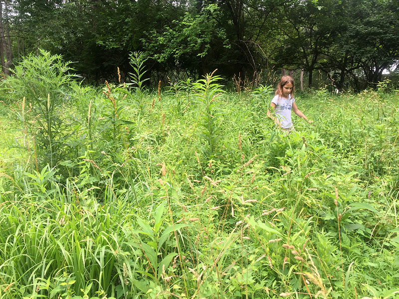 woodend_tallgrass