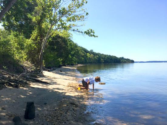 Searching for shark teeth along the Potomac shore