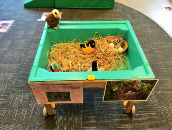 A sensory table for infants during a recent class on birds